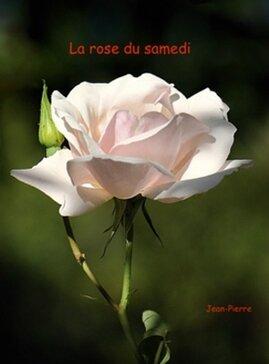 La rose du samedi N° 12