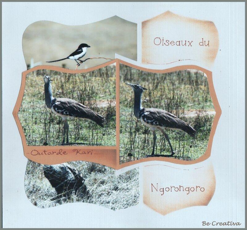 OiseauxDuNgorongoro2