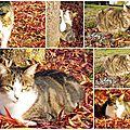chats d automne