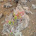 Bois de rempart dans la plaine des sables au volcan