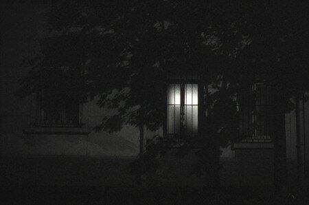 07-Ombre-et-arbre-