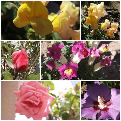 Conserves & jardin (15)