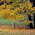 l' automne dans la région...