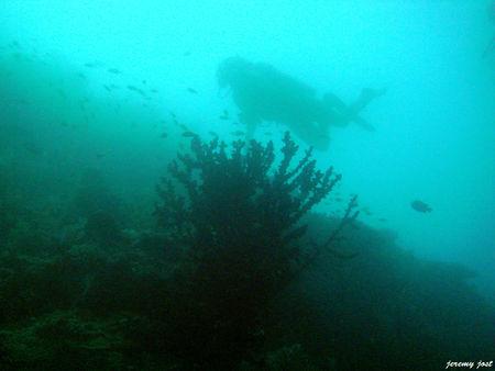 plongeur_et_corail_noir
