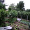 le potager sous la pluie