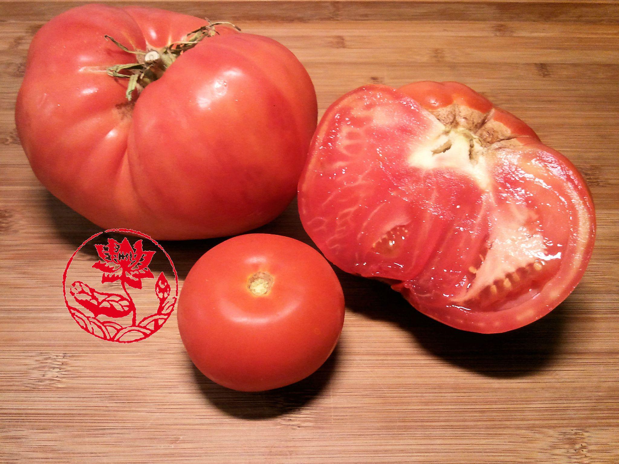 Tomates coeur de boeuf tomates farcies rizi re des parfums - Planter des tomates coeur de boeuf ...