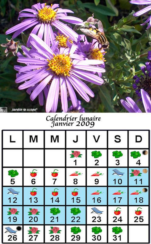 jardiner avec la lune au mois de janvier 2009 le jardinoscope cot pratique les bons gestes. Black Bedroom Furniture Sets. Home Design Ideas