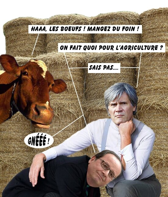 hollande-lefoll-interrogations-vache-bulles