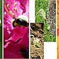 Mosaïque des vidéos du concours sur le thème du jardin : plus qu'une semaine pour participer !
