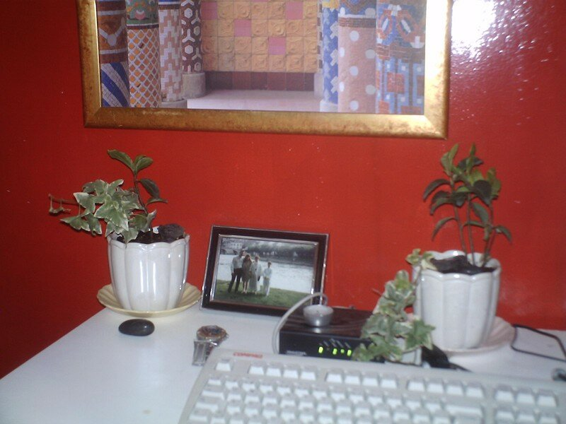 les petites plante de mon bureau photo de les belles plantes de la maison mickael dhaine. Black Bedroom Furniture Sets. Home Design Ideas