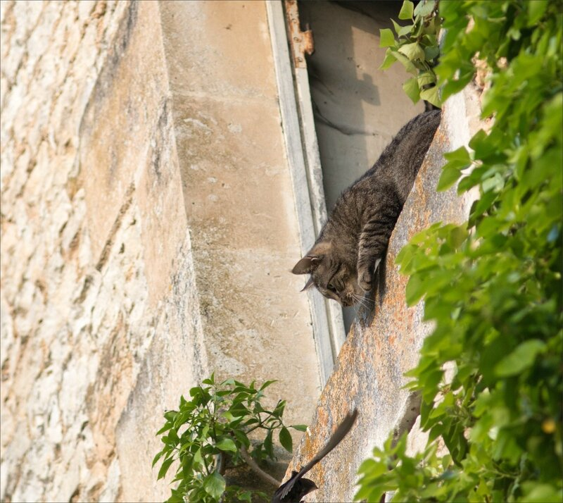 ville chat martinet 280516 5