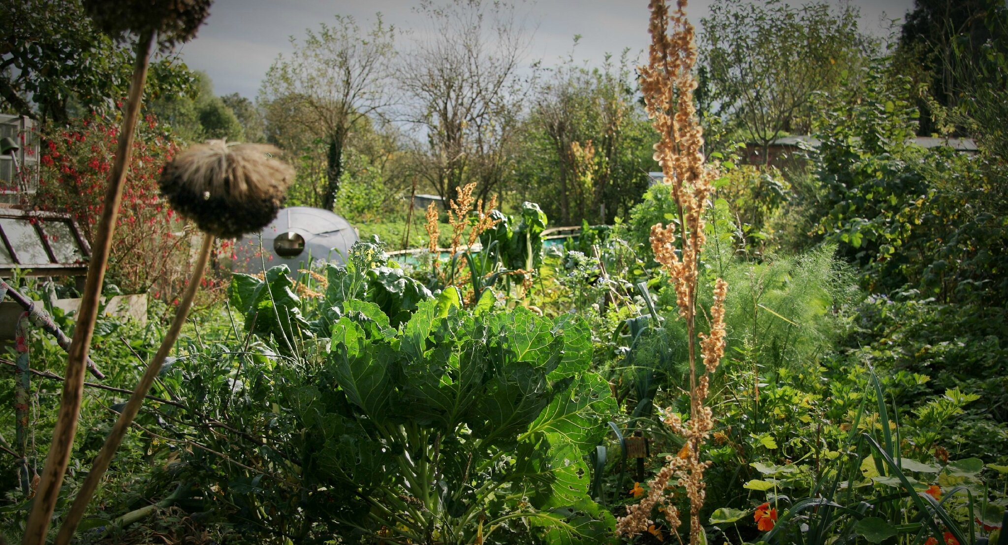 L'Escargotier et la permaculture : un désordre...très structuré !