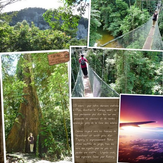 canopy_walk_mulu550