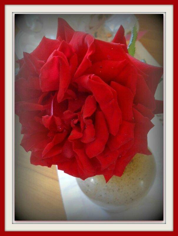 rose juju98619371