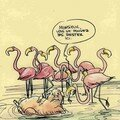 Flamands roses