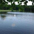 étang dans un parc francilien