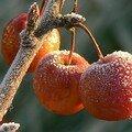 Fruits bien conservés!