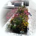 Quelques photos sur le fleurissement de notre commune