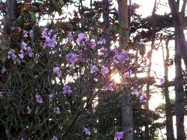 parc-floral-vincennes-printemps-fleurs-jonquilles-magnolias (14)