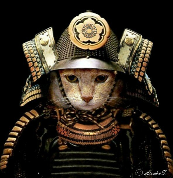 SAMURAI CAT 6
