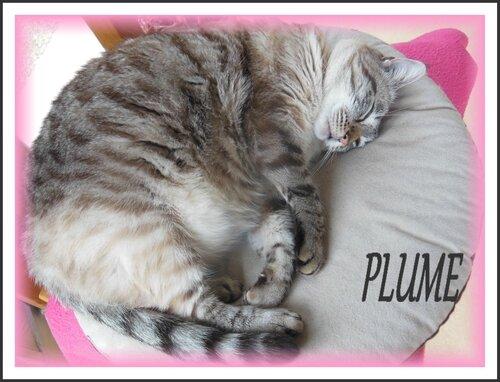 PLUME (2)