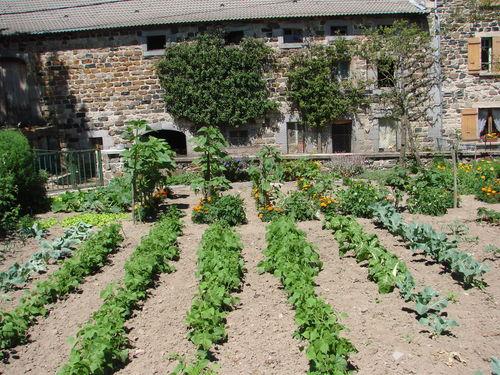 2008 08 02 Une partie du jardin, légumes et fleurs