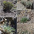 Ginkgo Petrified Forest State Park Plants Flora