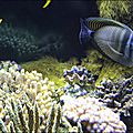 Océanopolis 12