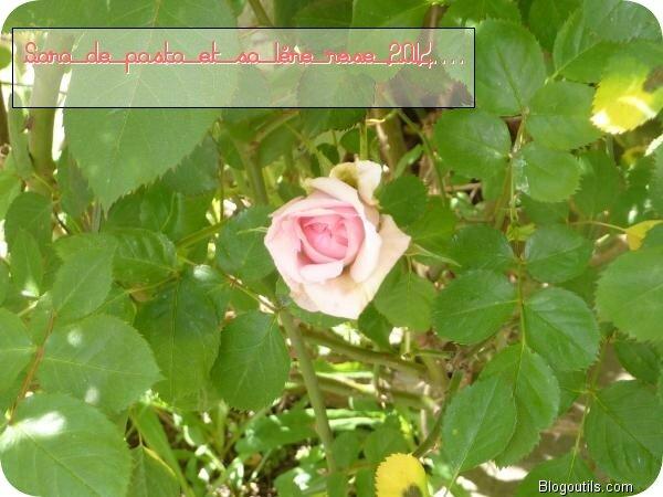 Ma 1éres rose........ Mon jasmin...... Mon 1er