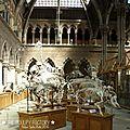 Oxford_MuseumOfNaturalHistory#2