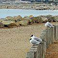Marseille Pointe Rouge