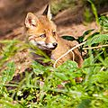 2014-05-30 LUX-1133