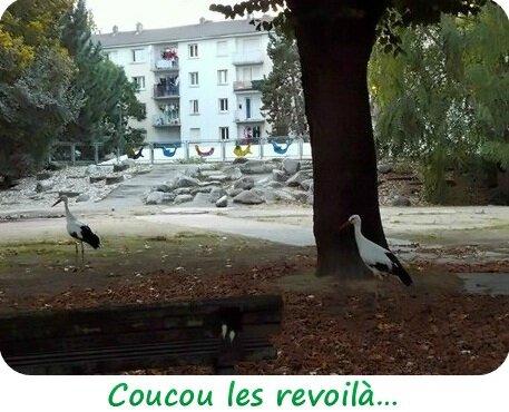Quartier Drouot - Cigognes
