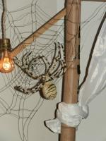 Atelier insectes