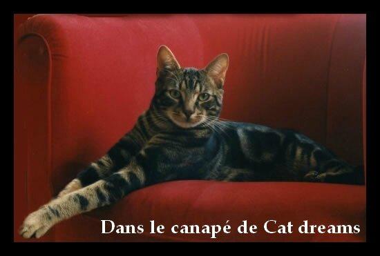 Dans le canapé de Cat dreams