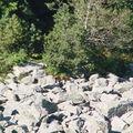 2008 08 21 Un renard au pied du 2008 08 21 Le chemin du retour du Mont Mézenc