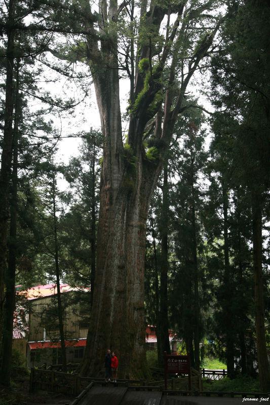 nol et jey sacred tree