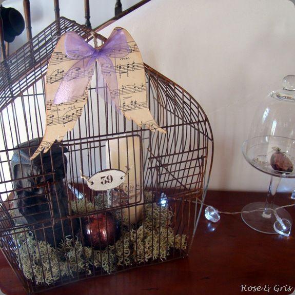 tête de marmouset en cage