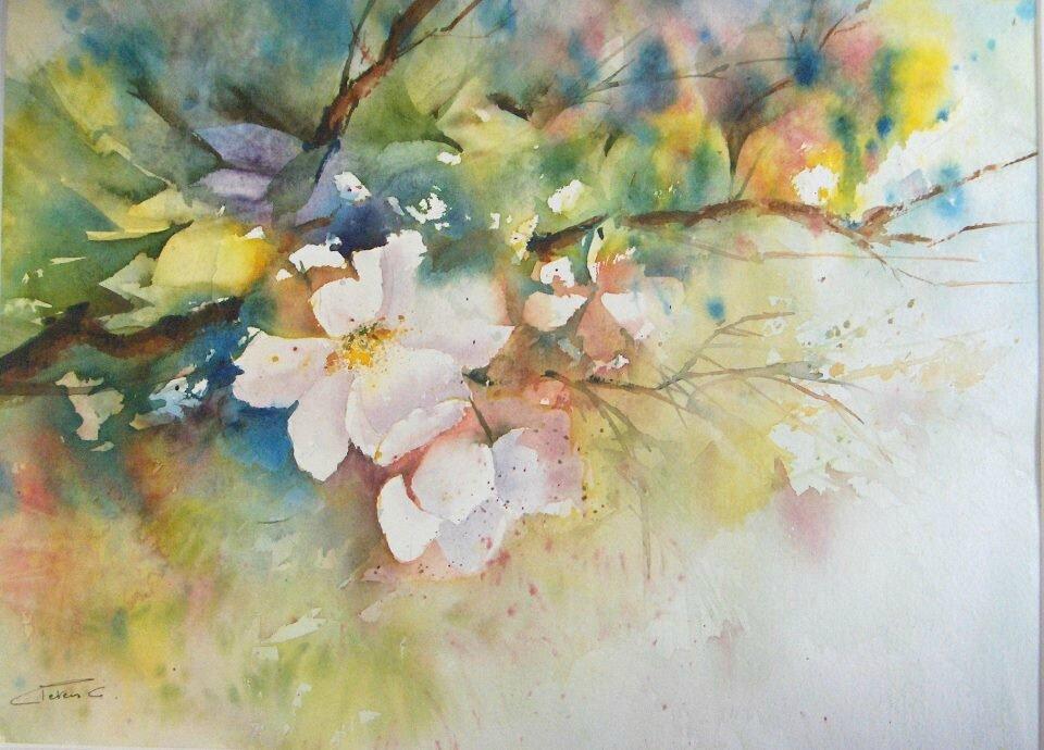 Fleurs de pommier photo de a fleurs caroline peters for Aquarelle fleurs