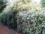 Ispahan jardin jasmin