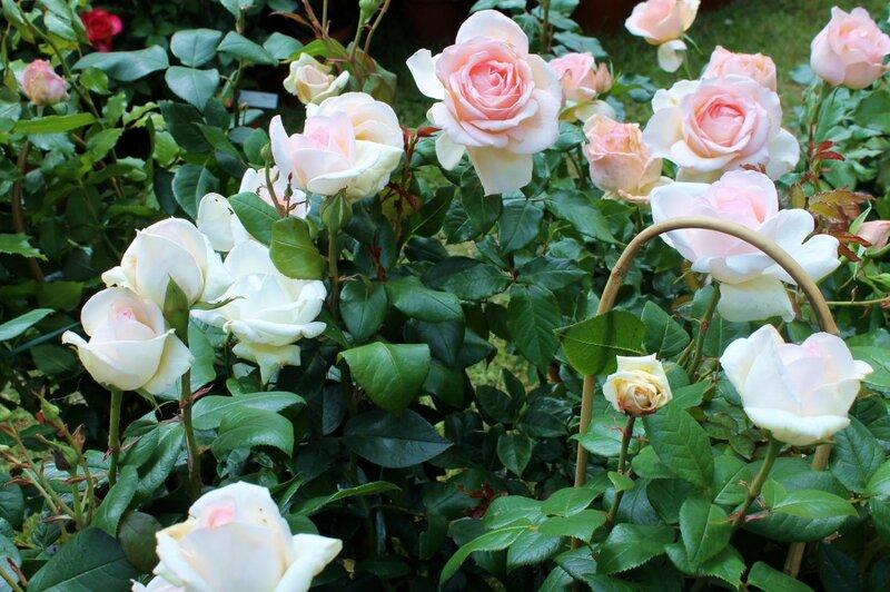 Fête de la rose Veules-les-Roses 013