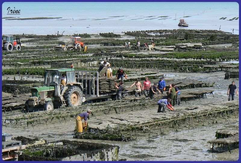 jardinier de la mer 2