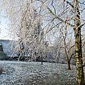 Mon jardin en hiver