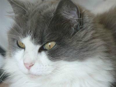 ma Princesse Loulou sept 2010 (1) - Copie