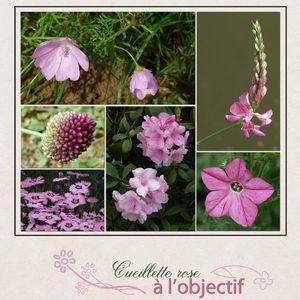 10_Cueillette