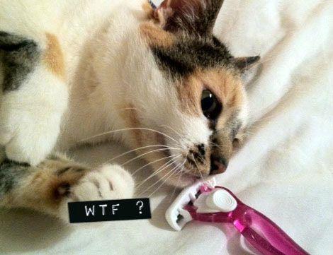 rasoir et chat