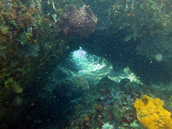 Madi-plongée (11)