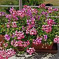 Sur la terrasse, les plantes poussent aussi.