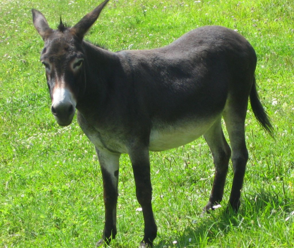 MuleduPape