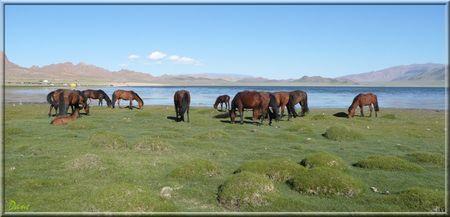 1_mongolie_chevaux_lac
